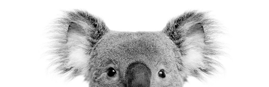 Forex spread betting australia